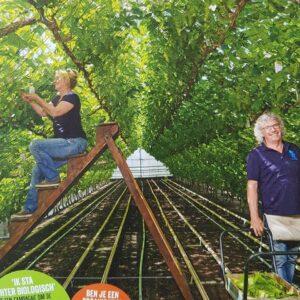 nieuw tuinzight druiven