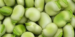 tuinbonen